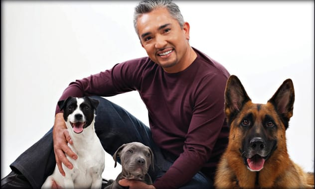 Cesar Millan Speaks Out Against Costa Rican Puppy Mills