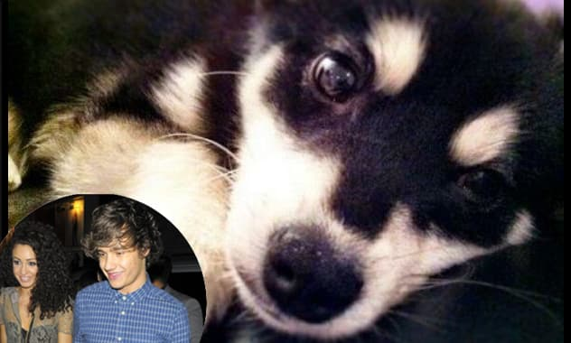 Liam Payne From One Direction and Girlfriend Tweet About New Puppy, Death Threats Follow