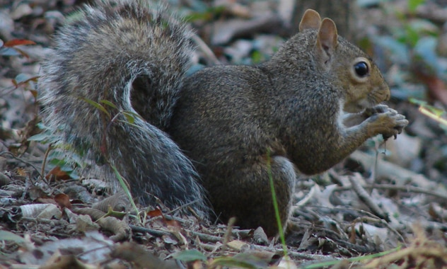 National Wildlife Federation Teams Up with The Nut Job to Celebrate National Squirrel Appreciation Day