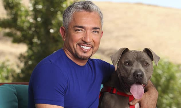 Cesar Millan To Host Pet Adoption Event At The Humane Society Of Greater Miami