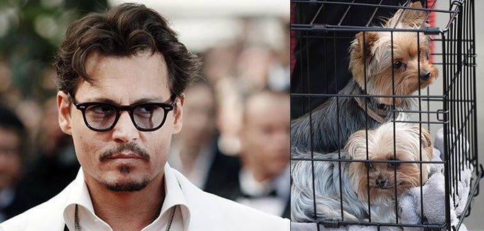 Johnny Depp May Be Facing Severe Prison Time For Smuggling His Dogs Into Australia